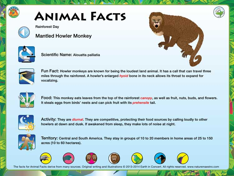 Nature Maestro Rainforest Day Fact Card Image